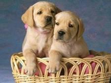 Consejos veterinarios esterilización