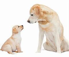 Pack de bienvenida cachorro y adulto